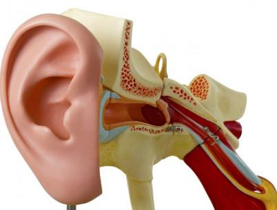 Снижение слуха (Тугоухость)